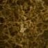 Marron Emperrador - marbre
